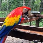 https://roadlesstraveled.smugmug.com/Website-Photos/Website-Galleries/Amor-Por-Los-Animales/i-4rf34xb