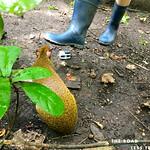 https://roadlesstraveled.smugmug.com/Website-Photos/Website-Galleries/Amor-Por-Los-Animales/i-95qFVkB