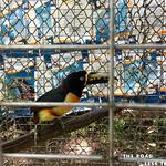https://roadlesstraveled.smugmug.com/Website-Photos/Website-Galleries/Amor-Por-Los-Animales/i-BpK8HW8