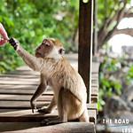 https://roadlesstraveled.smugmug.com/Website-Photos/Website-Galleries/Amor-Por-Los-Animales/i-CdtVPDw