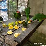 https://roadlesstraveled.smugmug.com/Website-Photos/Website-Galleries/Amor-Por-Los-Animales/i-CnWfwWC
