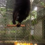 https://roadlesstraveled.smugmug.com/Website-Photos/Website-Galleries/Amor-Por-Los-Animales/i-FFxmzqn