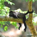 https://roadlesstraveled.smugmug.com/Website-Photos/Website-Galleries/Amor-Por-Los-Animales/i-FRWcVgx