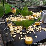 https://roadlesstraveled.smugmug.com/Website-Photos/Website-Galleries/Amor-Por-Los-Animales/i-FfjqLpj