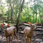 https://roadlesstraveled.smugmug.com/Website-Photos/Website-Galleries/Amor-Por-Los-Animales/i-GxL9RQV
