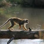 https://roadlesstraveled.smugmug.com/Website-Photos/Website-Galleries/Amor-Por-Los-Animales/i-HVhZQst