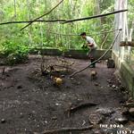 https://roadlesstraveled.smugmug.com/Website-Photos/Website-Galleries/Amor-Por-Los-Animales/i-JLXdRX2
