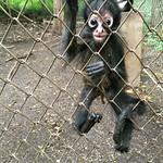 https://roadlesstraveled.smugmug.com/Website-Photos/Website-Galleries/Amor-Por-Los-Animales/i-KLxt7PZ