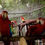 https://roadlesstraveled.smugmug.com/Website-Photos/Website-Galleries/Amor-Por-Los-Animales/i-PfQNfcv