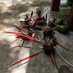 https://roadlesstraveled.smugmug.com/Website-Photos/Website-Galleries/Amor-Por-Los-Animales/i-Pzfj3rW