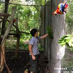 https://roadlesstraveled.smugmug.com/Website-Photos/Website-Galleries/Amor-Por-Los-Animales/i-SSmxH5h