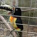 https://roadlesstraveled.smugmug.com/Website-Photos/Website-Galleries/Amor-Por-Los-Animales/i-TfHf4Jg