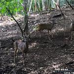 https://roadlesstraveled.smugmug.com/Website-Photos/Website-Galleries/Amor-Por-Los-Animales/i-TvgZ27B