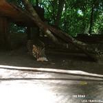 https://roadlesstraveled.smugmug.com/Website-Photos/Website-Galleries/Amor-Por-Los-Animales/i-dTqpPJ5