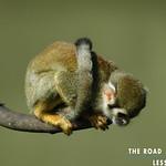 https://roadlesstraveled.smugmug.com/Website-Photos/Website-Galleries/Amor-Por-Los-Animales/i-mL94w7m