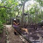 https://roadlesstraveled.smugmug.com/Website-Photos/Website-Galleries/Amor-Por-Los-Animales/i-mbsB8rP