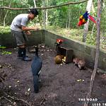 https://roadlesstraveled.smugmug.com/Website-Photos/Website-Galleries/Amor-Por-Los-Animales/i-n7vLfZ2