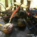 https://roadlesstraveled.smugmug.com/Website-Photos/Website-Galleries/Amor-Por-Los-Animales/i-pTG273q