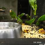 https://roadlesstraveled.smugmug.com/Website-Photos/Website-Galleries/Amor-Por-Los-Animales/i-pVhjN6X