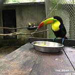 https://roadlesstraveled.smugmug.com/Website-Photos/Website-Galleries/Amor-Por-Los-Animales/i-ppWkL7X