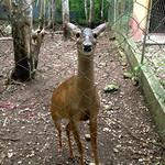 https://roadlesstraveled.smugmug.com/Website-Photos/Website-Galleries/Amor-Por-Los-Animales/i-q8sVX7L