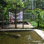 https://roadlesstraveled.smugmug.com/Website-Photos/Website-Galleries/Amor-Por-Los-Animales/i-qtcpjWt