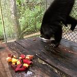 https://roadlesstraveled.smugmug.com/Website-Photos/Website-Galleries/Amor-Por-Los-Animales/i-tVVqcTH