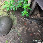 https://roadlesstraveled.smugmug.com/Website-Photos/Website-Galleries/Amor-Por-Los-Animales/i-vPvr44h