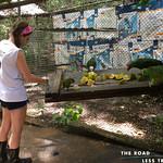 https://roadlesstraveled.smugmug.com/Website-Photos/Website-Galleries/Amor-Por-Los-Animales/i-vRjzTFZ