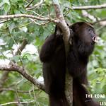 https://roadlesstraveled.smugmug.com/Website-Photos/Website-Galleries/Amor-Por-Los-Animales/i-zfF6Lck