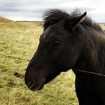 https://roadlesstraveled.smugmug.com/Website-Photos/Website-Galleries/Iceland/i-3LN6nKx