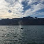 https://roadlesstraveled.smugmug.com/Website-Photos/Website-Galleries/Iceland/i-N4NcdcS