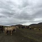 https://roadlesstraveled.smugmug.com/Website-Photos/Website-Galleries/Iceland/i-RMpnGLg