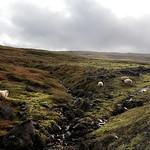 https://roadlesstraveled.smugmug.com/Website-Photos/Website-Galleries/Iceland/i-S9kb4cx