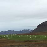 https://roadlesstraveled.smugmug.com/Website-Photos/Website-Galleries/Iceland/i-VXNKctR