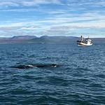 https://roadlesstraveled.smugmug.com/Website-Photos/Website-Galleries/Iceland/i-sDTqRX5
