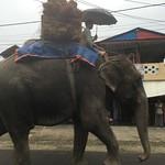 https://roadlesstraveled.smugmug.com/Website-Photos/Website-Galleries/Nepal/i-ZRtFjbM