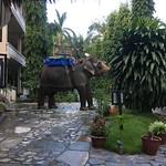 https://roadlesstraveled.smugmug.com/Website-Photos/Website-Galleries/Nepal/i-tSFQDbH