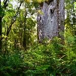 https://roadlesstraveled.smugmug.com/Website-Photos/Website-Galleries/New-Zealand/i-mXNpDQF
