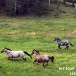 https://roadlesstraveled.smugmug.com/Website-Photos/Website-Galleries/New-colorado/i-VhgcfHq