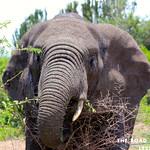 https://roadlesstraveled.smugmug.com/Website-Photos/Website-Galleries/Ross-uganda/i-3cVSMMj