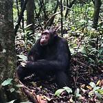 https://roadlesstraveled.smugmug.com/Website-Photos/Website-Galleries/Ross-uganda/i-4XjpqMj