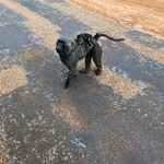 https://roadlesstraveled.smugmug.com/Website-Photos/Website-Galleries/Ross-uganda/i-5WN6q7n