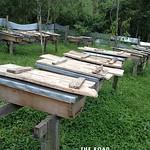 https://roadlesstraveled.smugmug.com/Website-Photos/Website-Galleries/Ross-uganda/i-6DMsCnN