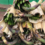 https://roadlesstraveled.smugmug.com/Website-Photos/Website-Galleries/Ross-uganda/i-7BVX8Qp