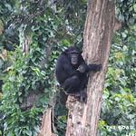 https://roadlesstraveled.smugmug.com/Website-Photos/Website-Galleries/Ross-uganda/i-83PmWFg