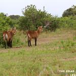 https://roadlesstraveled.smugmug.com/Website-Photos/Website-Galleries/Ross-uganda/i-BnGRbSL