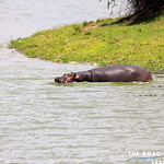 https://roadlesstraveled.smugmug.com/Website-Photos/Website-Galleries/Ross-uganda/i-FBLPJZR