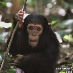 https://roadlesstraveled.smugmug.com/Website-Photos/Website-Galleries/Ross-uganda/i-H2VC9kq