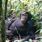 https://roadlesstraveled.smugmug.com/Website-Photos/Website-Galleries/Ross-uganda/i-JHq34HP